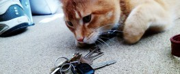My Pet Sitter Lost my Key… What do I do? (Can this happen?)