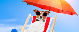 Can your dog get a sunburn!? Find out!